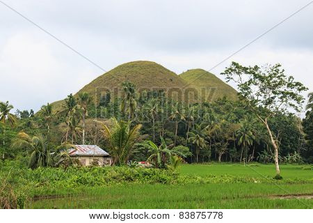 Chocolate Hills And Farmer House