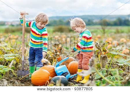 Two little sbilings sitting on big pumpkins on autumn day choosing squash for halloween or thanksgiving on pumpkin patch. Kid boys having fun with farming. poster