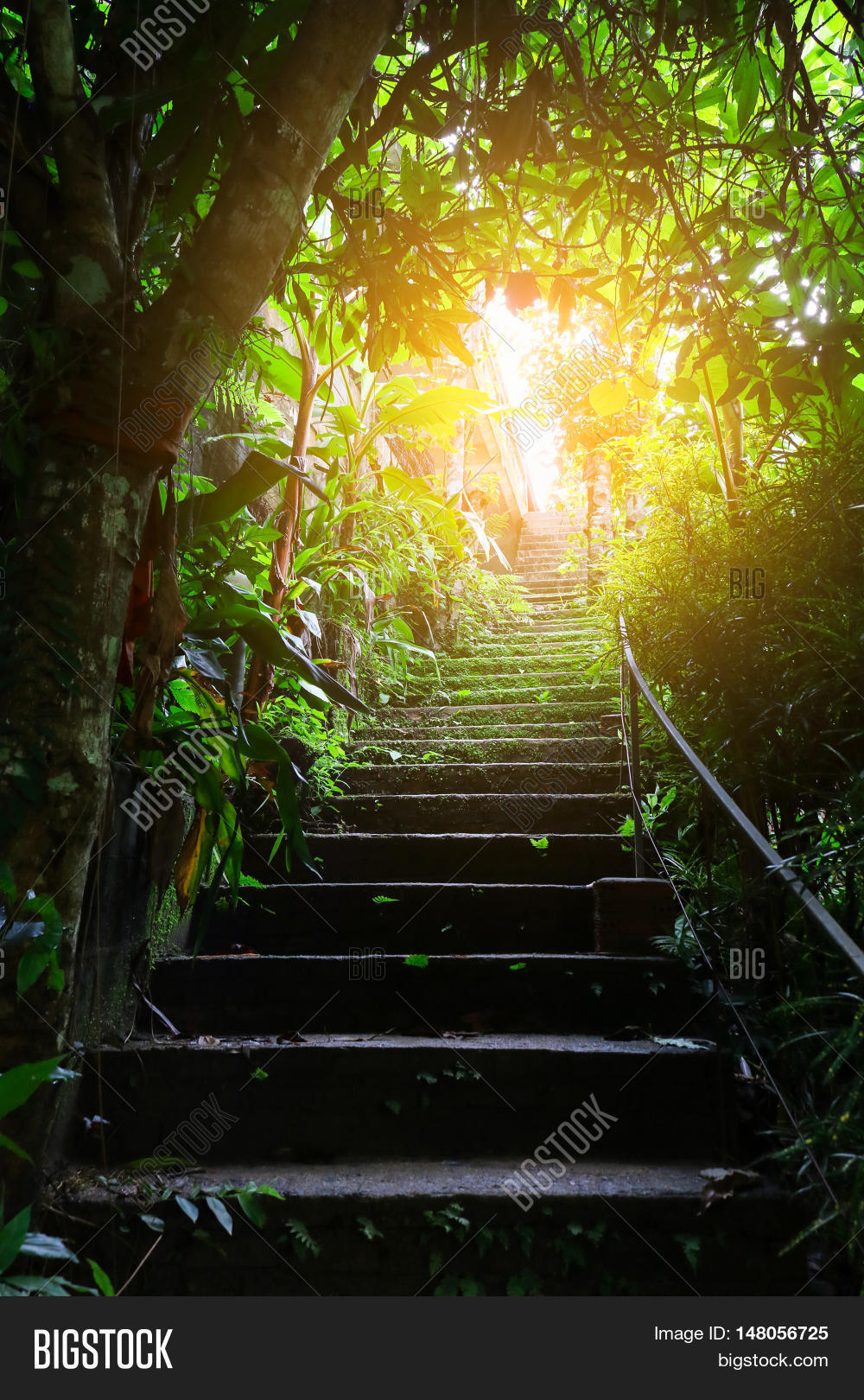 Perfect Stair In Forest And Light In Dark. (Thereu0027s A Light At The End Of