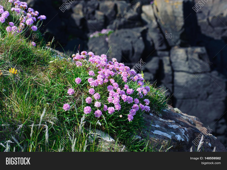 Beautiful Pink Flowers Image Photo Free Trial Bigstock