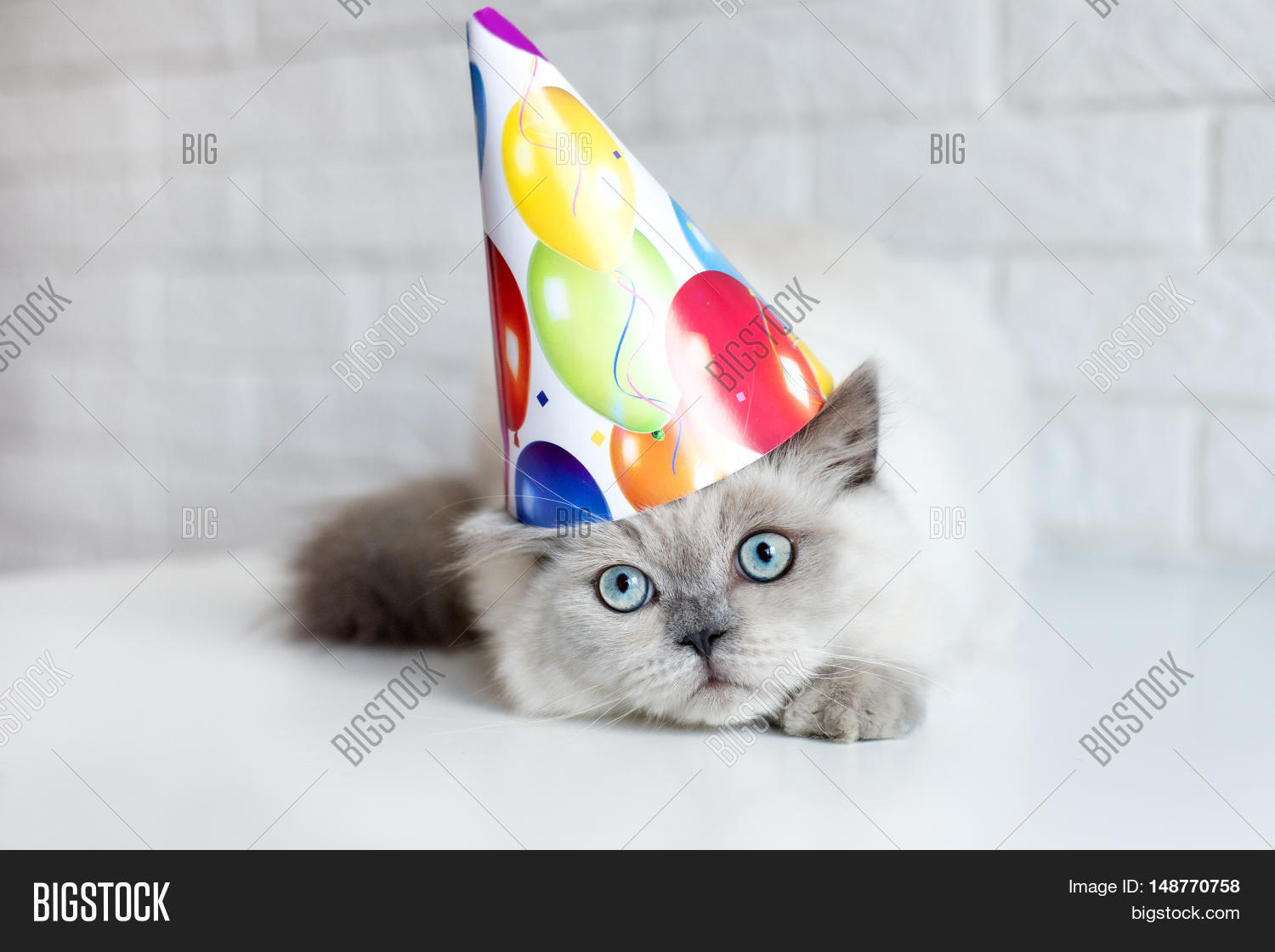 Funny Cat In A Birthday Hat Posing Indoors