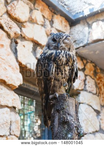 Eagle Owl - Bubo Bubo - is sitting on a log and looking out for prey
