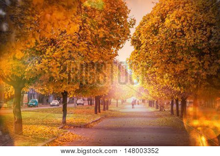 Beautiful alley in fall season in the city with yellow colored trees