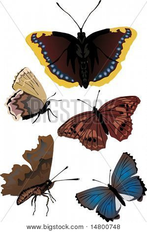 illustration with five different butterflies isolated on white background