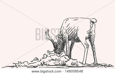 Sketch of reindeer grazing Hand drawn vector illustration