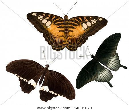 collection of tropical butterflies isolated on white background