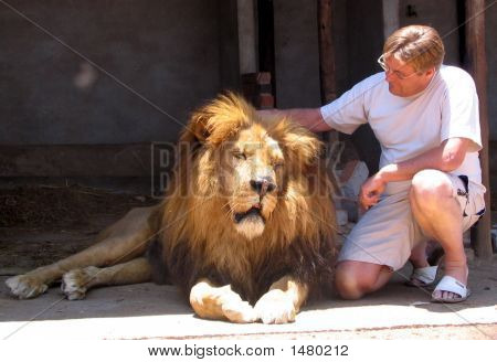 Man Caressing A Lion