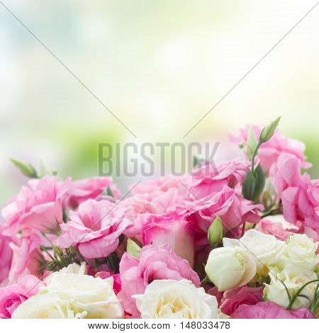 border of pink and white roses and eustoma flowers in green garden