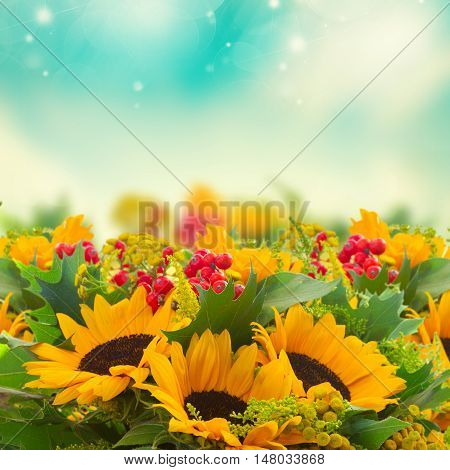 Bunch of bright sunflowers with green leaves and red berries on fall sky bokeh background
