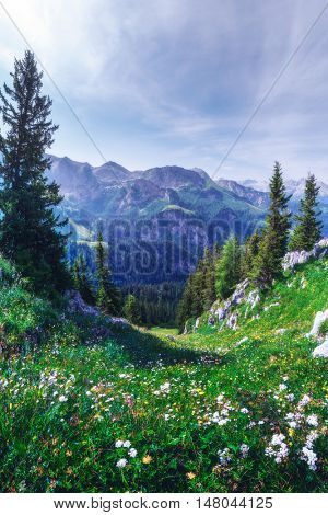 Beautiful view from top of cableway above the Konigsee lake on Schneibstein mountain ridge. Border of German and Austrian Alps, Europe.