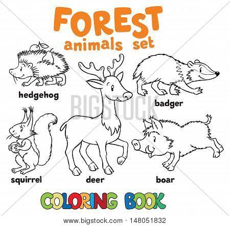 Coloring book set of funny hedgehog, squirrel, bagger, boar and deer. Children vector illustration. Forest animals