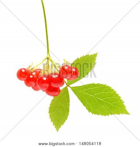 Ripe stone berry isolated on white background