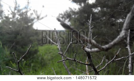 The dried-up branches against the background of the wood