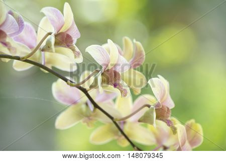 orchid flower with blur tree nature background.