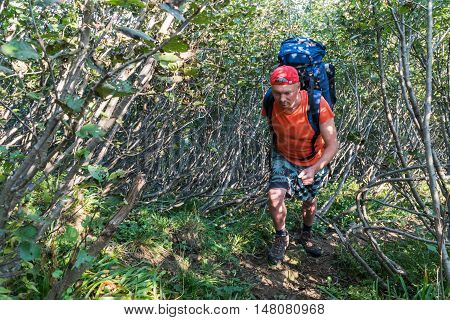 Tourist man with big backpack on his back rises up through the shrubbery
