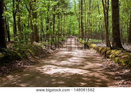 A dirt road through a forest in the summer.
