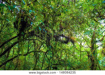 Rainforest Greenery Scene On Chiangdao Mountain