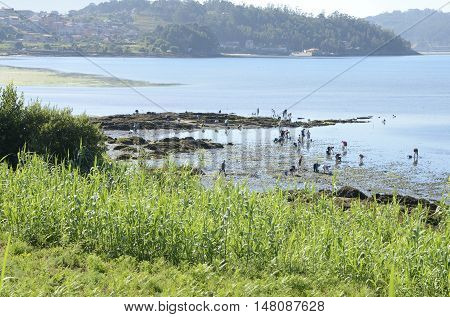 COMBARRO, SPAIN - AUGUST 5, 2016: People gathering shelfish on the shore of the Ria de Pontevedra Combarro Galicia Spain.