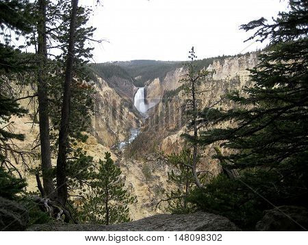 The Grand Canyon of the Yellowstone with some trees in Yellowstone National Park (Wyoming, USA)