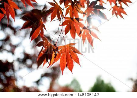 Fall, autumn, leaves, leaf background. A tree branch with autumn leaves on a blurred background. Landscape in autumn season
