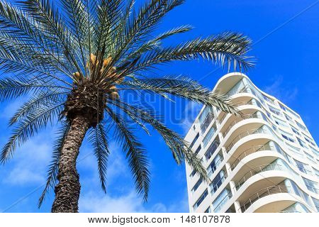 palm tree and building against the sky