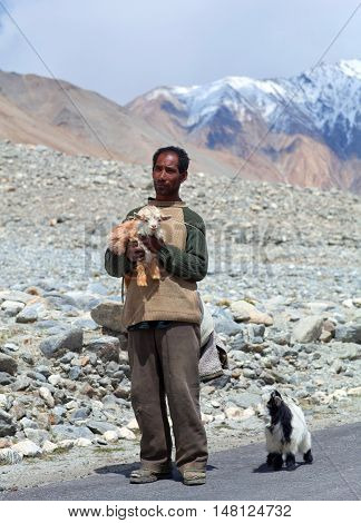 Tibetan Nomad With Goatling In Ladakh, India