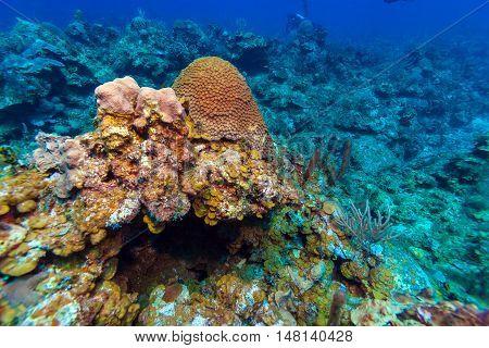 Underwater Background With Soft And Hard Corals, Cayo Largo