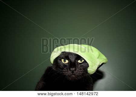 Cat in grinch like spirit with a green background