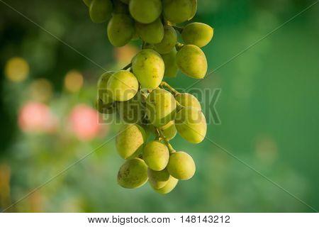 White Bunch Of Grape