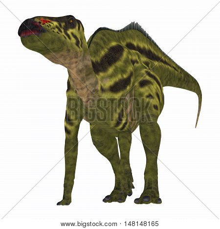 Shantungosaurus Dinosaur on White 3D Illustration - Shantungosaurus was a herbivorous Hadrosaur dinosaur that lived in China in the Cretaceous Period.