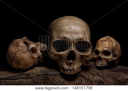 Three human skulls on the timber over darkness background with still life style