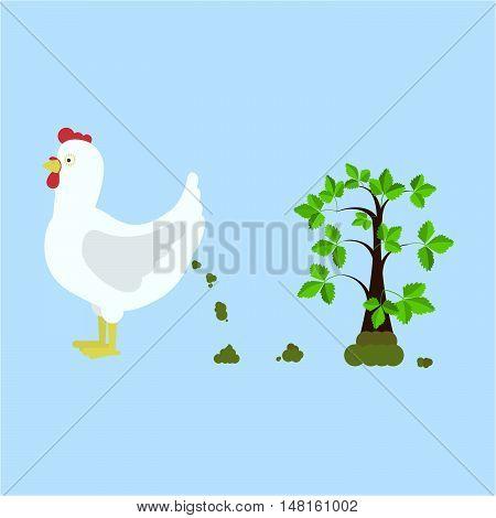 Chicken Fertilizing The Land