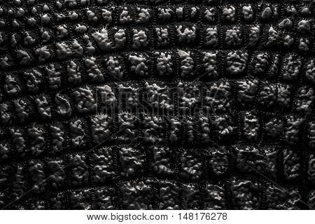 Metallic Texture Like Crocodile Skin Leather