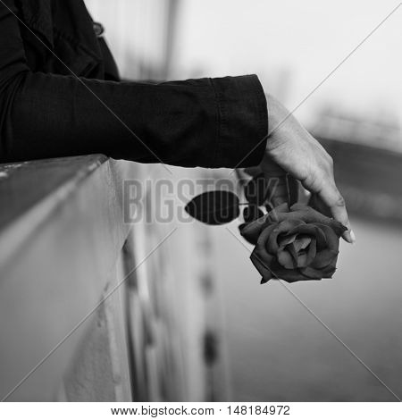 Rose Love Care Passion Romance Like Affection Concept