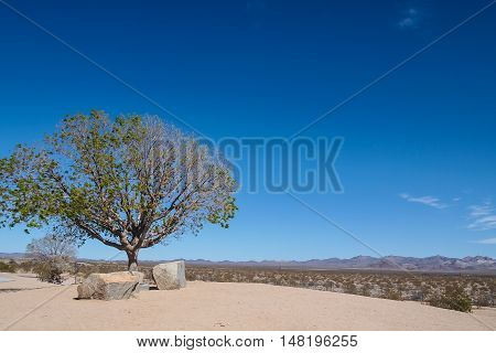 Tree and stone on the rest area beside California Desert Highway United States.