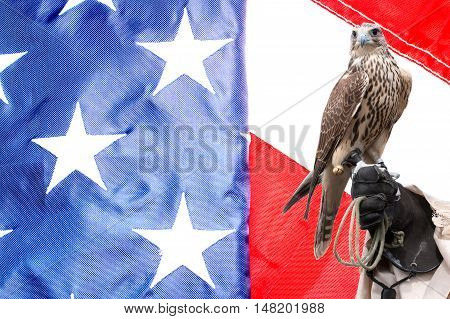 Falcon on handlers hand on US flag background