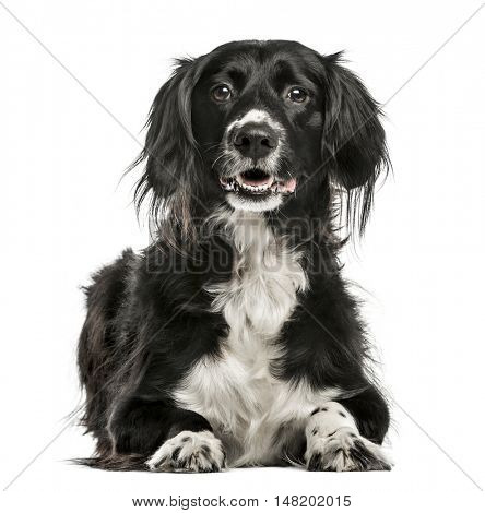 Mixed-breed dog, 10 years old, lying and looking at camera, isolated on white