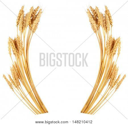 Ears of wheat. Frame
