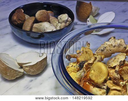 fresh raw mushrooms, funghi freschi appena colti
