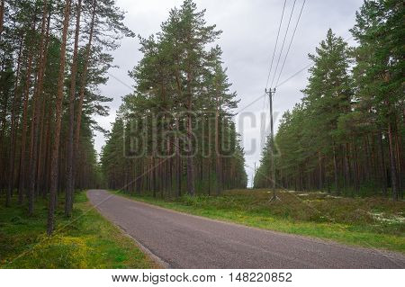 Turning road and power lines cut through wooded area