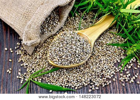 Grain hemp in a wooden spoon with a bag of coarse burlap against the background of the board