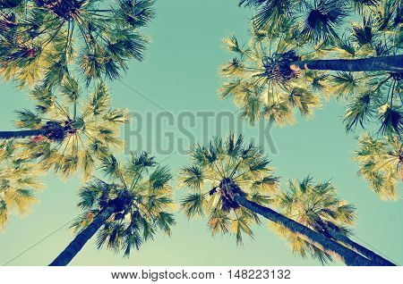Looking up at a canopy of tall Palm trees, Queensland, Australia. Retro summer vintage effect.