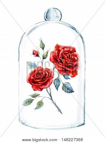 Beautiful watercolor illustration with red rose in a glass case