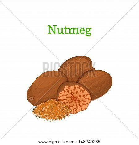 Nutmeg vector illustration of a handful of whole and crushed spices isolated on white background it can be used as packaging design element, printing brochures on healthy and vegetarian diet