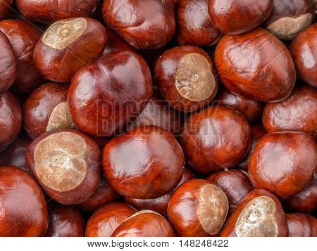 Bunch of chestnuts shot from above