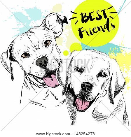 Vector hand drawn concept of labradoe retriever and pitbull terrier frienship. Color hand drawn domestic dog illustration. Decorated with blue blots. Best friends.