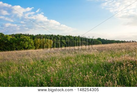 This image shows a meadow with forest at morning