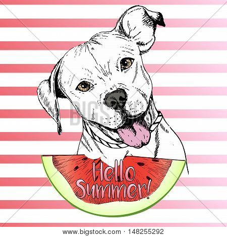 Vector hand drawn illustration of english pitbull dog eating the watermelon slice. Hello summer. Isolated on pink strips. fresh fashion vibrant summer poster.