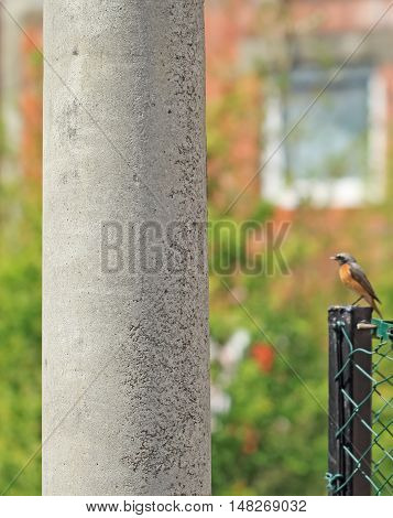 Concrete pillar in nature beside to the fence Nightingale