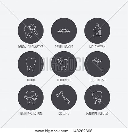 Tooth, dental braces and mouthwash icons. Diagnostics, toothbrush and toothache linear signs. Dentinal tubules, protection flat line icons. Linear icons in circle buttons. Flat web symbols. Vector
